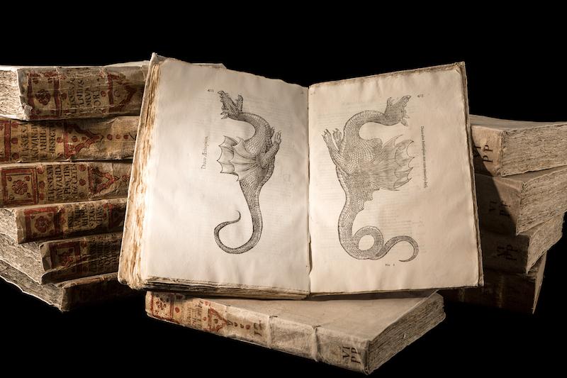 Natural History of Serpents and Dragons | galileo